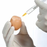 鸡蛋过敏与流感疫苗