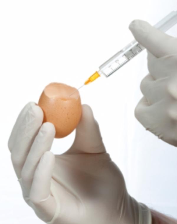 法拉盛 家庭医生 流感疫苗